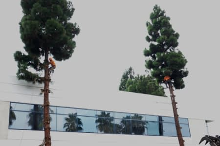 tree trimming service los angeles