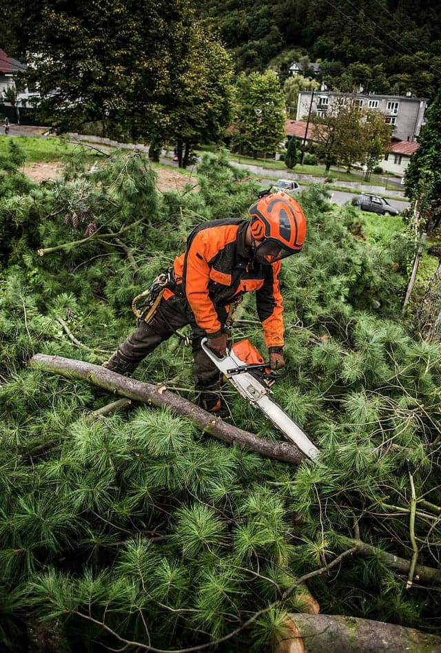 a modern-day lumberjack wearing orange and black clothing and equipment cutting a fallen tree with a chainsaw
