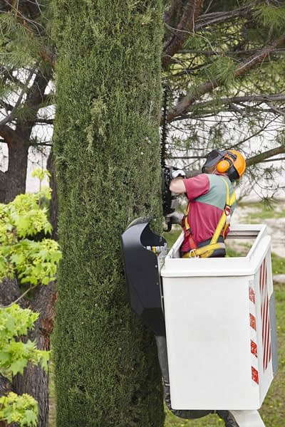 Equipped Worker Pruning a Tree
