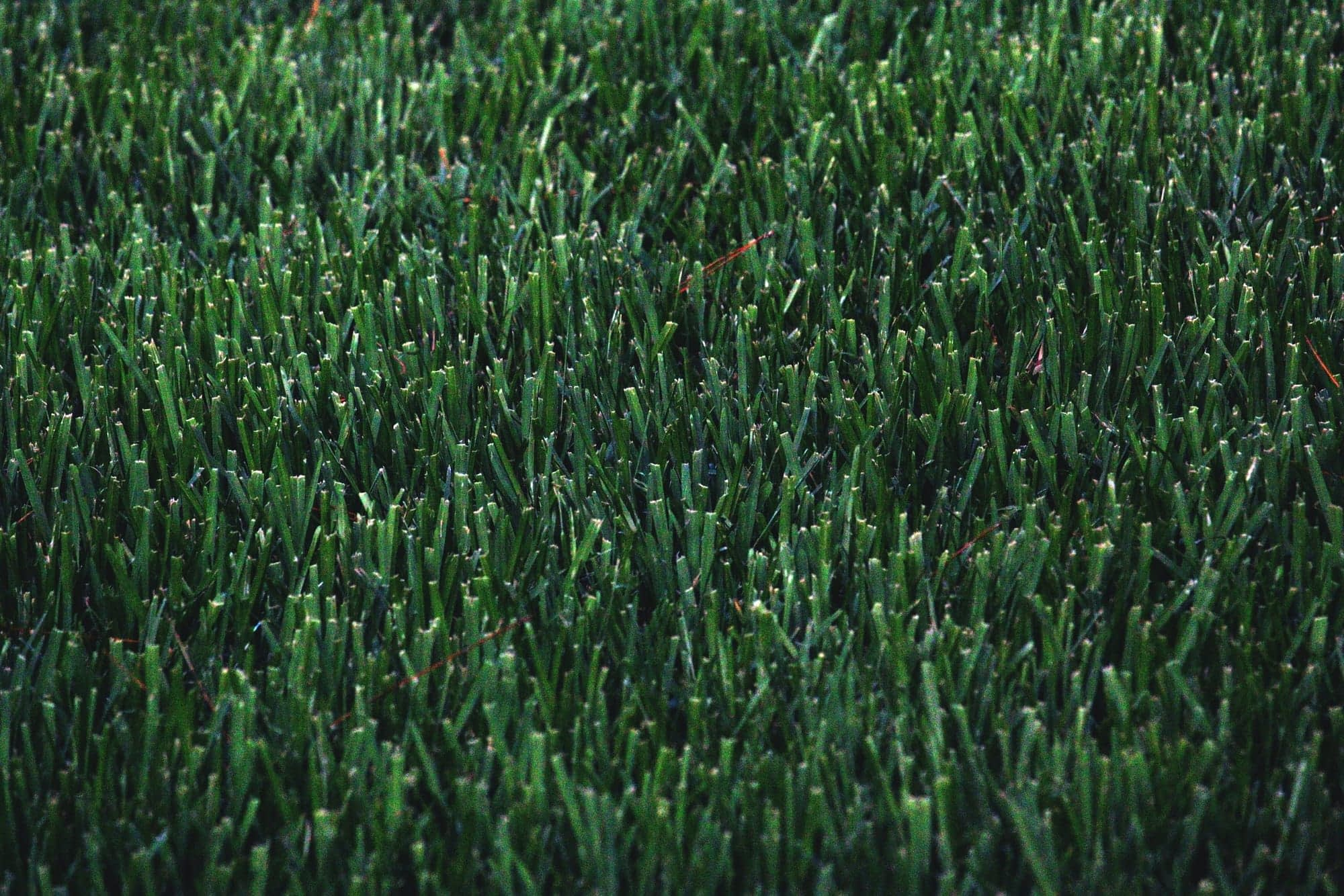 a close up of neatly trimmed grass