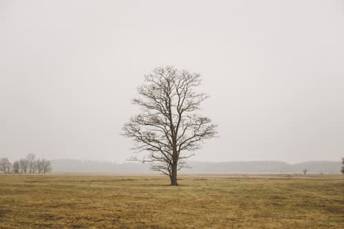 Tree without leaves in the middle of an open field