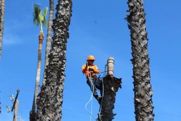 Tree Cutting Los Angeles