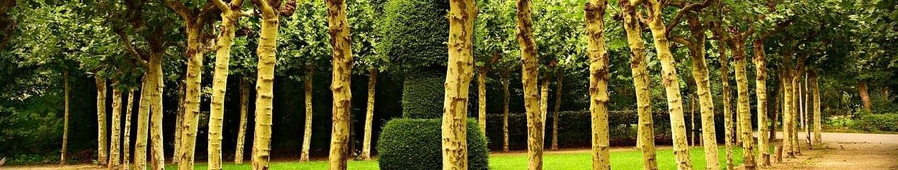 a square of evenly spaced trees surrounding a trimmed hedge