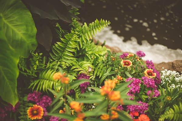 pink and orange flowers with green ferns