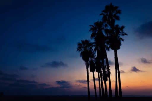 Silhouette of palm trees against a blue and orange sunset