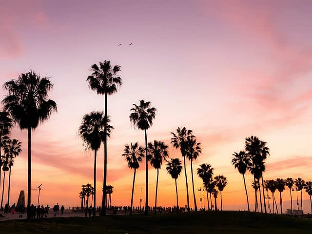 palm trees silhouetted on a pink and orange sky