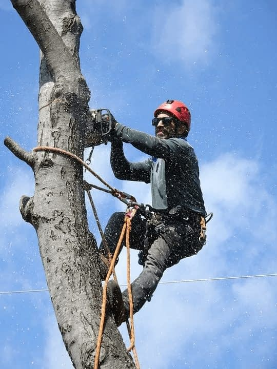 landscaper chainsawing tree using ropes