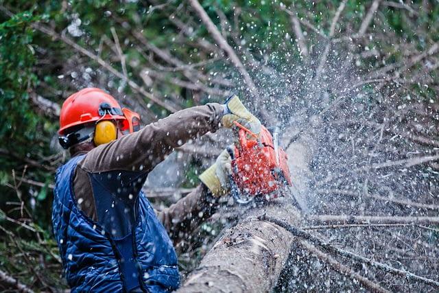 Professional Lumberjack Cutting a Tree