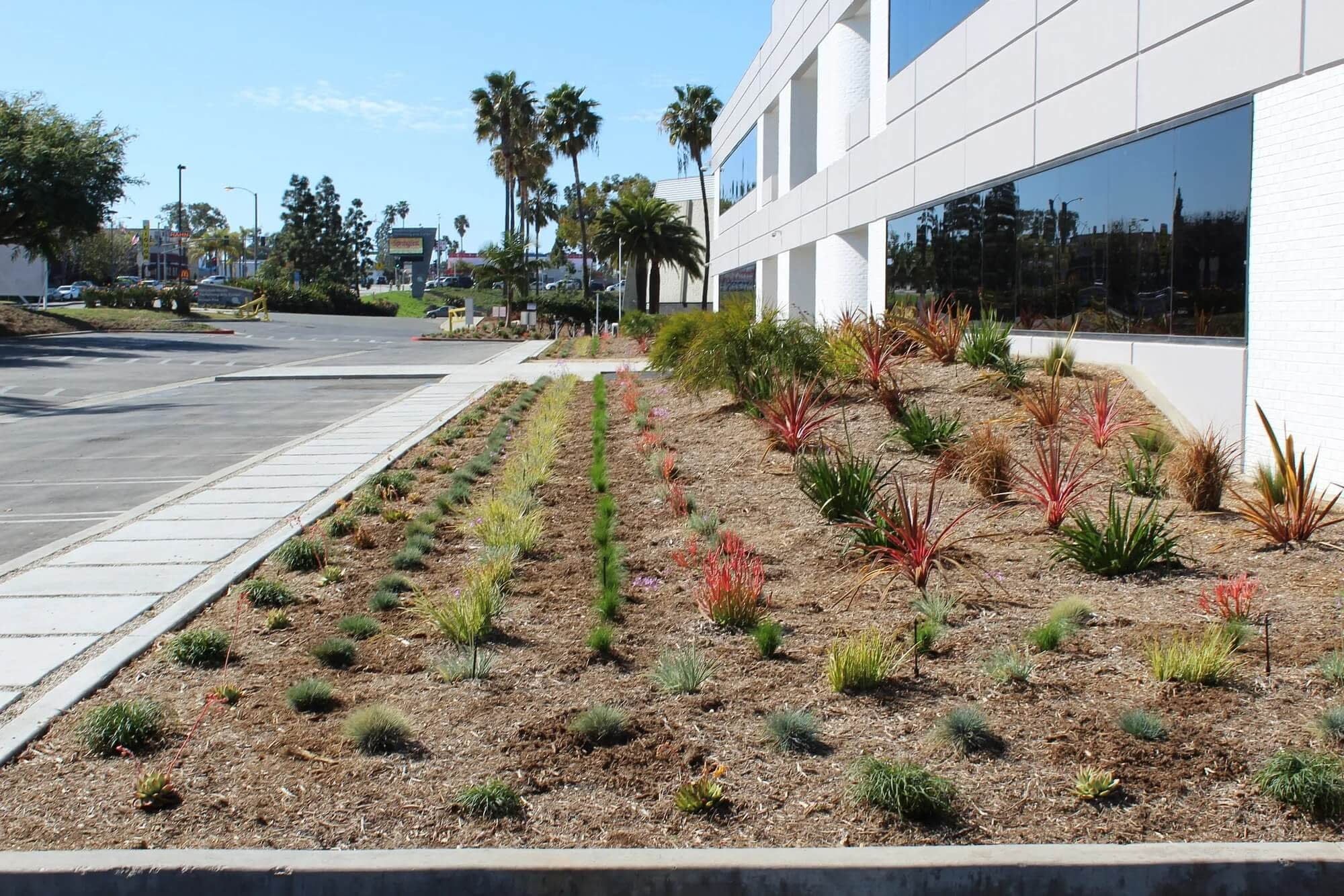a large section of nicely organized plants between a parking lot and a corporate building