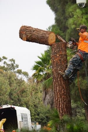 a man with a chainsaw cutting a section of a tree trunk off