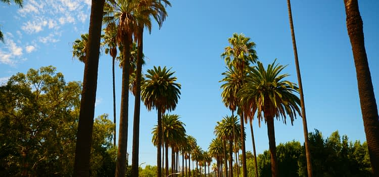 Los Angeles neighborhood trees