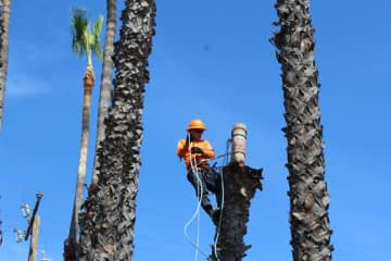 Tree Cutting Los Angeles