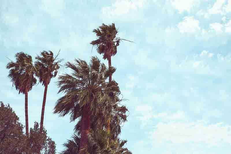 palm trees swaying in the wind against a blue cloudy sky